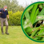Best lawn fungicide for brown patch